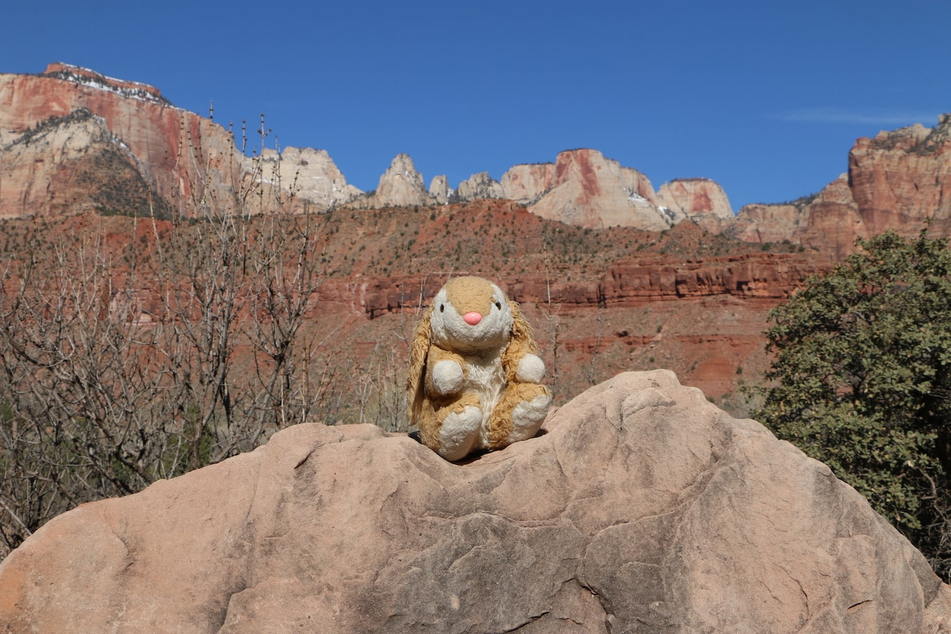 Bunny posing on the Watchman Trail