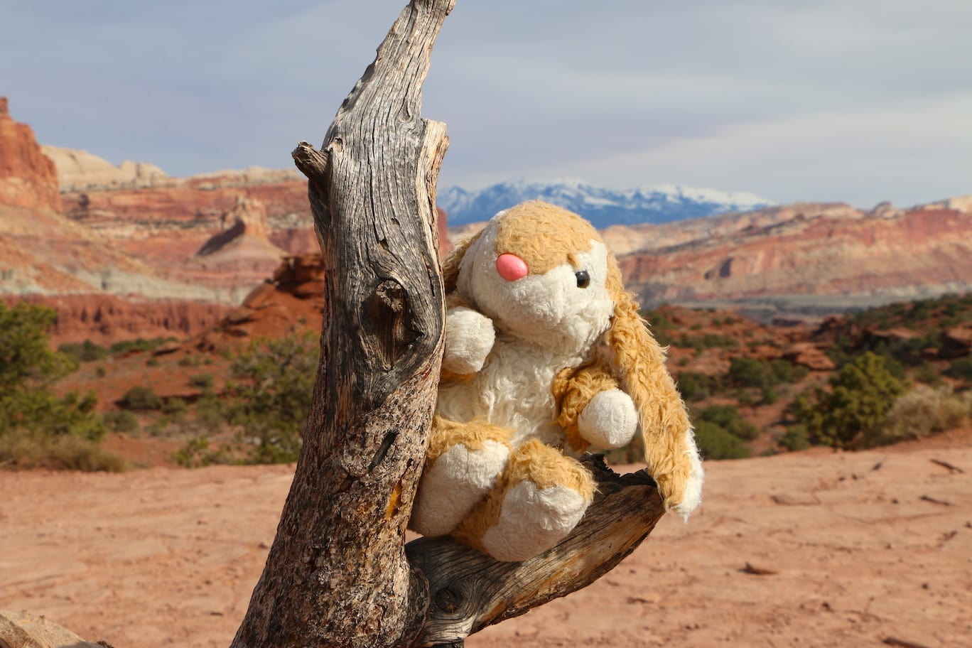 Bunny posing in Capitol Reef NP