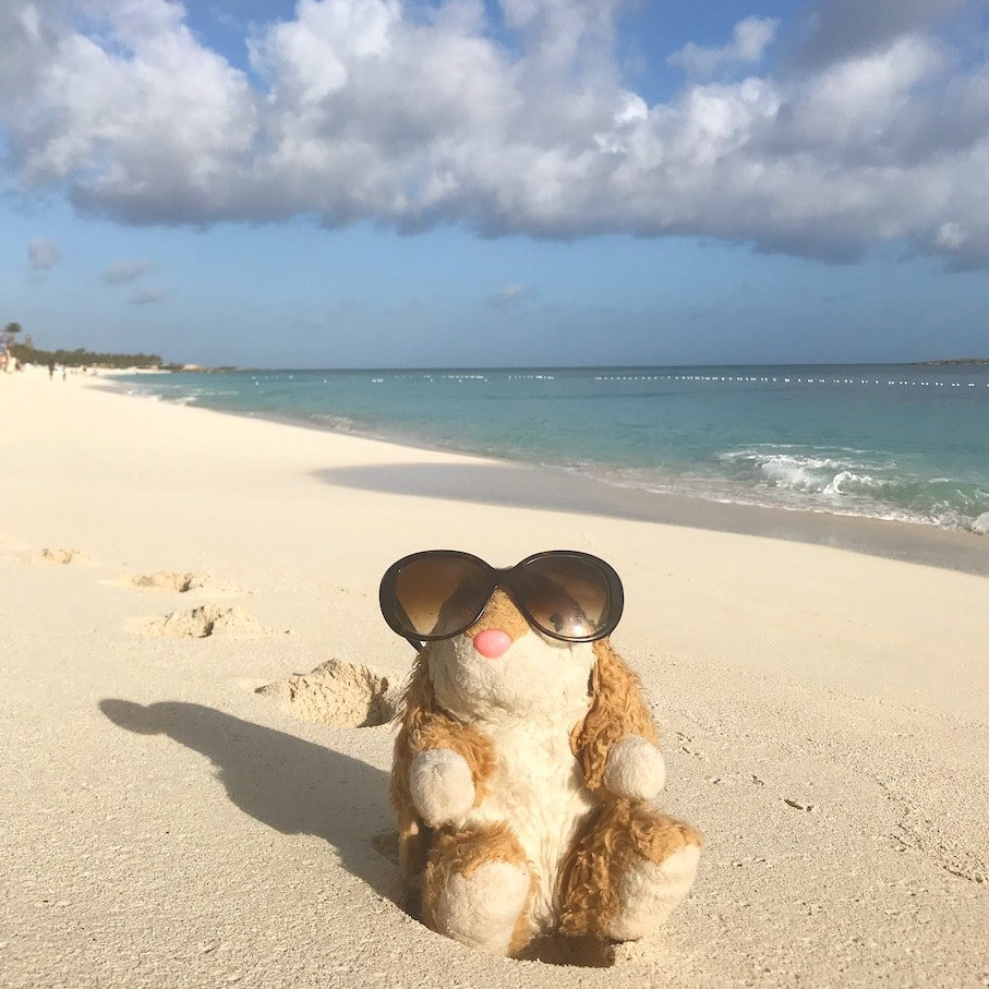 Bunny enjoying beach life in the Bahamas