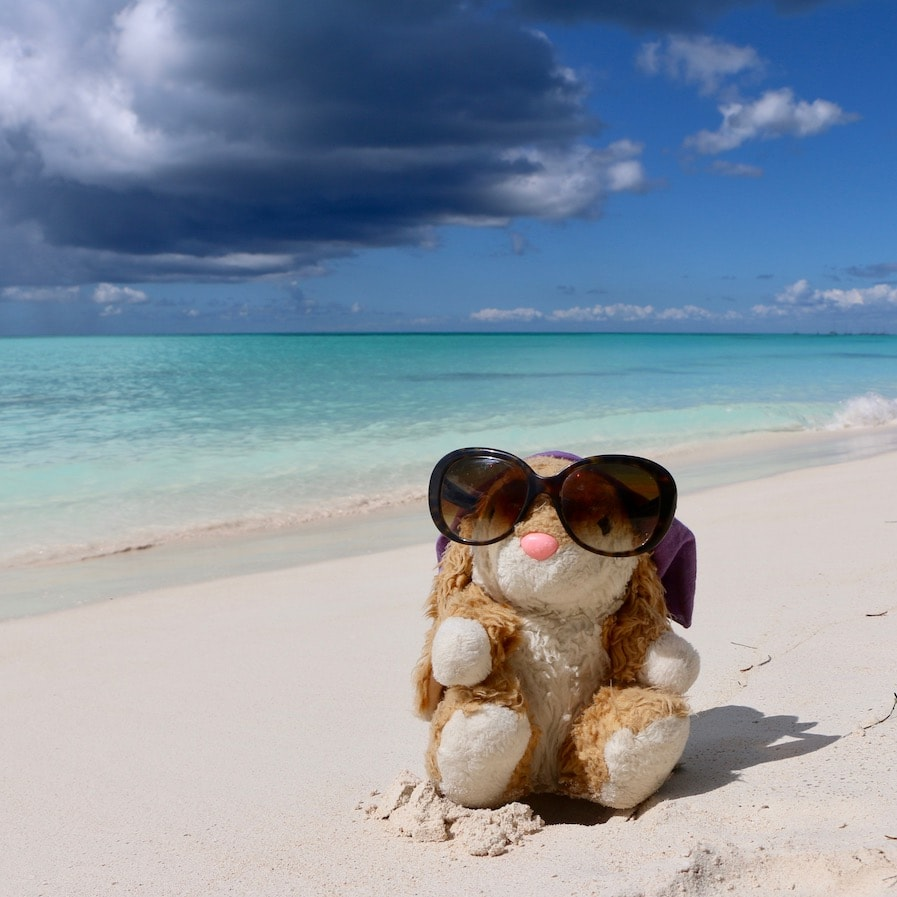 Bunny loves tropical beaches!