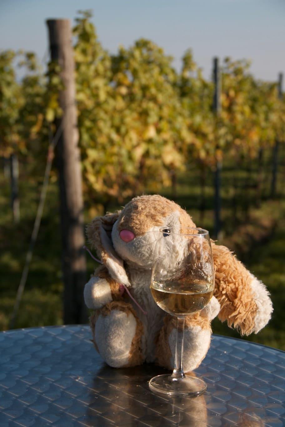 Bunny wine hiking