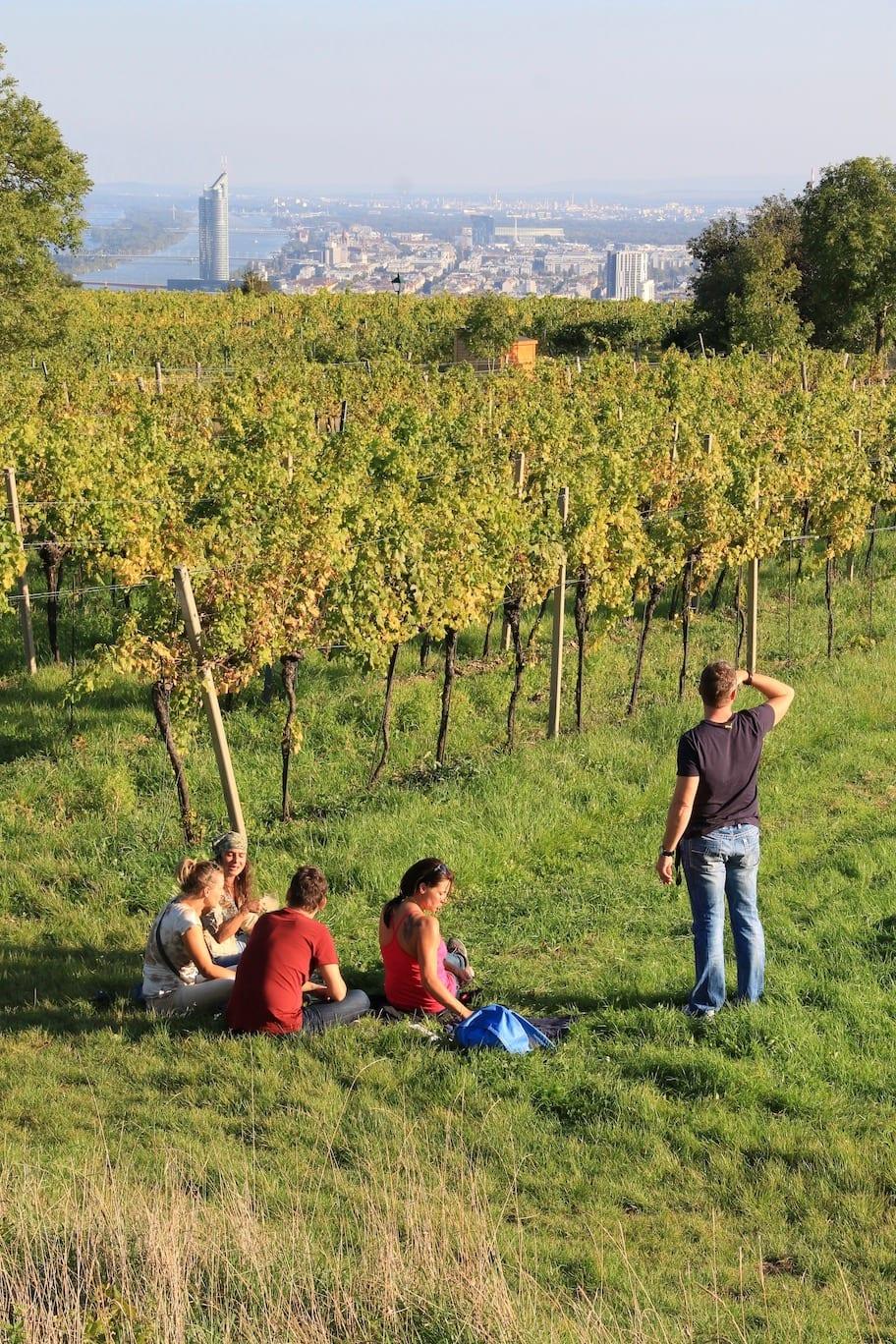 Wine tasting in Vienna