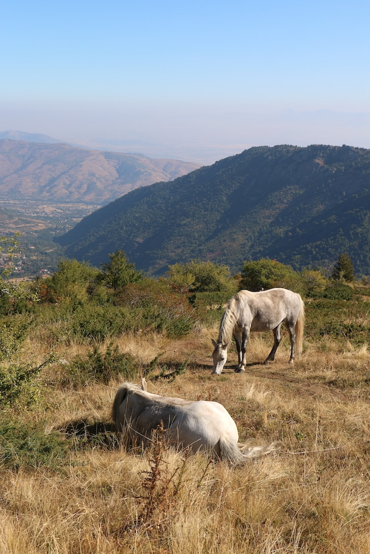 Horses encountered on the trail