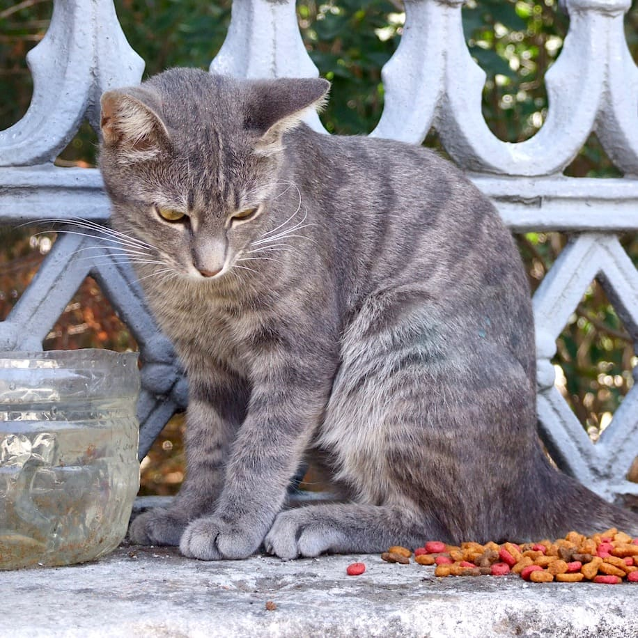 Bunny loves cats of Istanbul