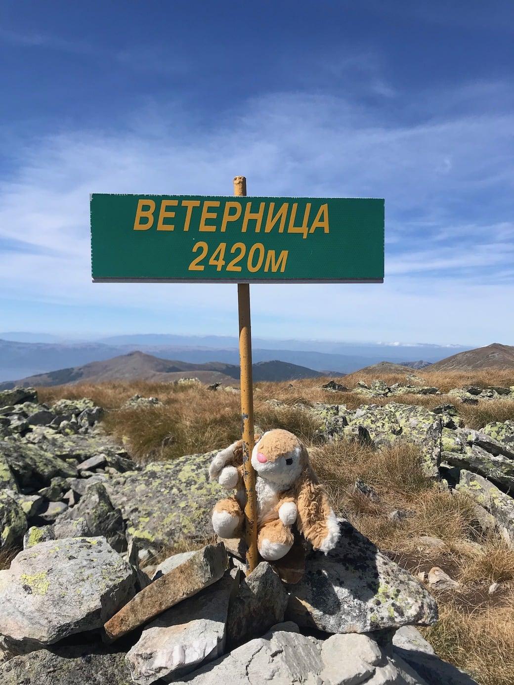Bunny conquering mountains