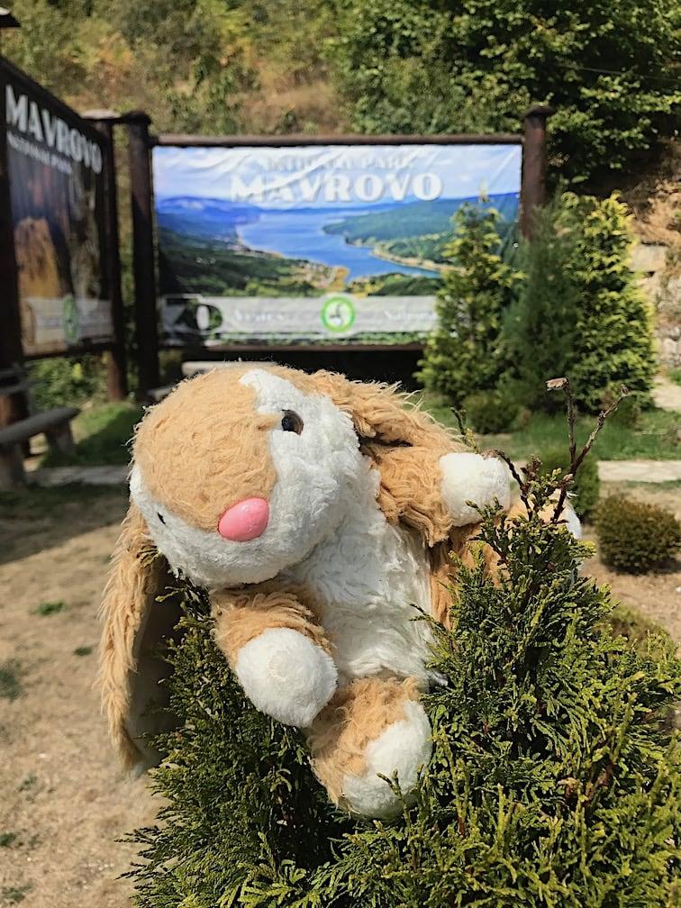 Bunny in Mavrovo