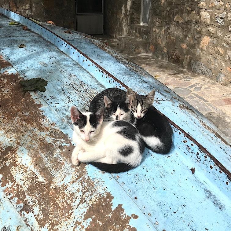 Cute kittens on a boat