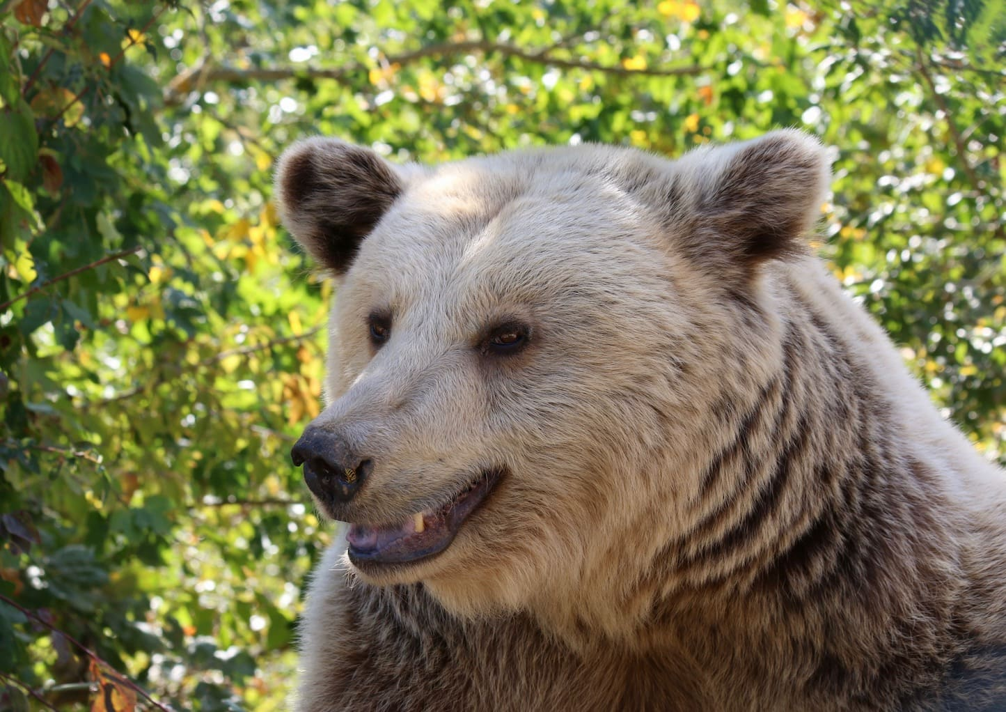 Kassandra was the first bear to move to the Bear Sanctionary