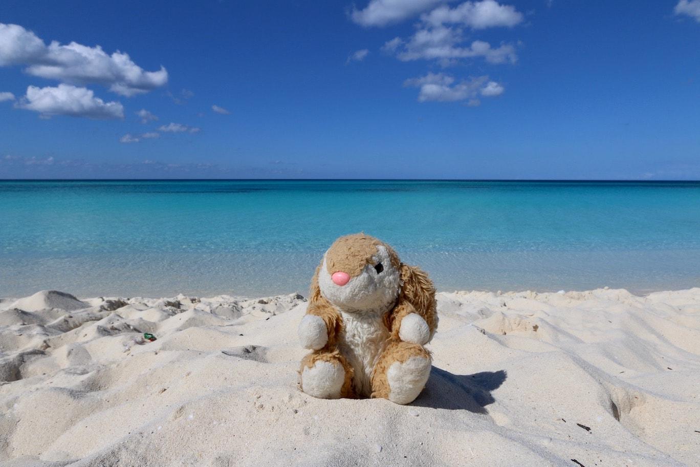 Bunny on a perfect beach
