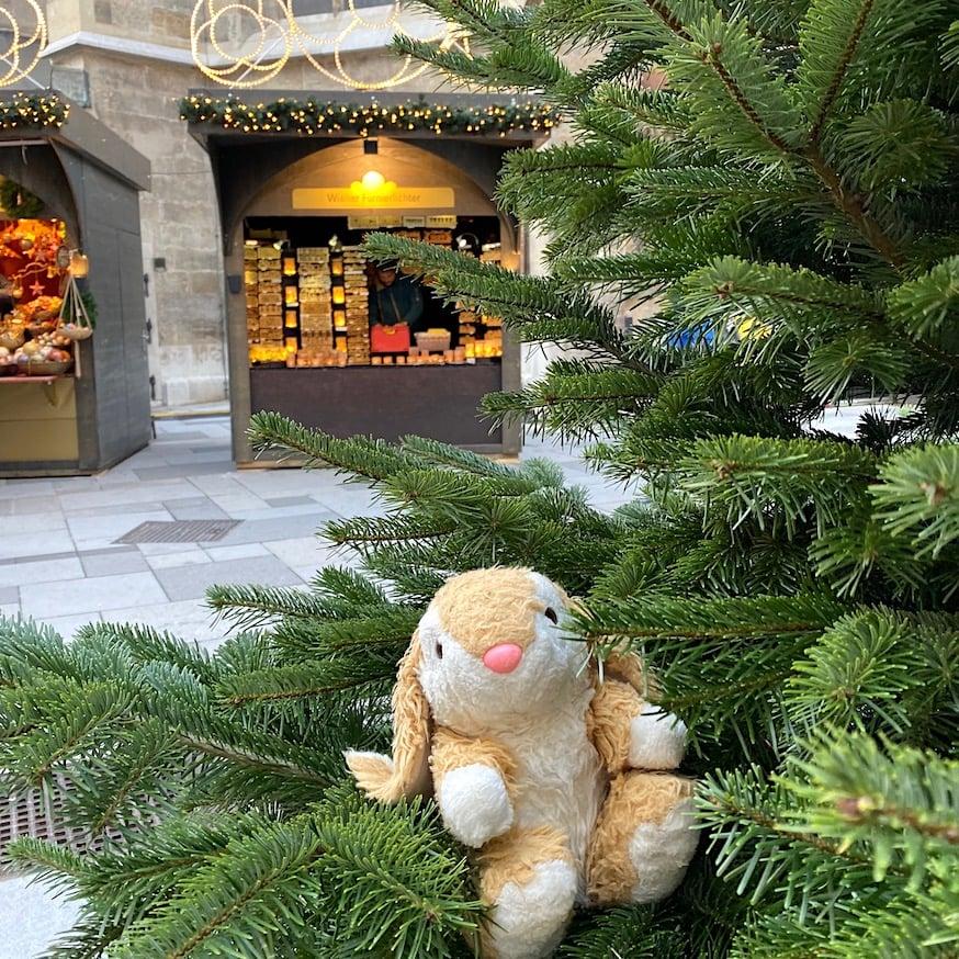 Bunny at Stephansdom