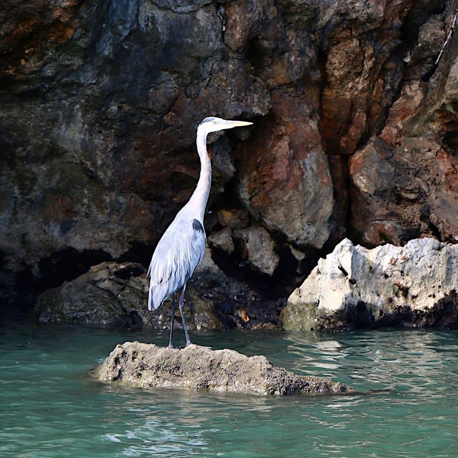 Birds of Los Haitises