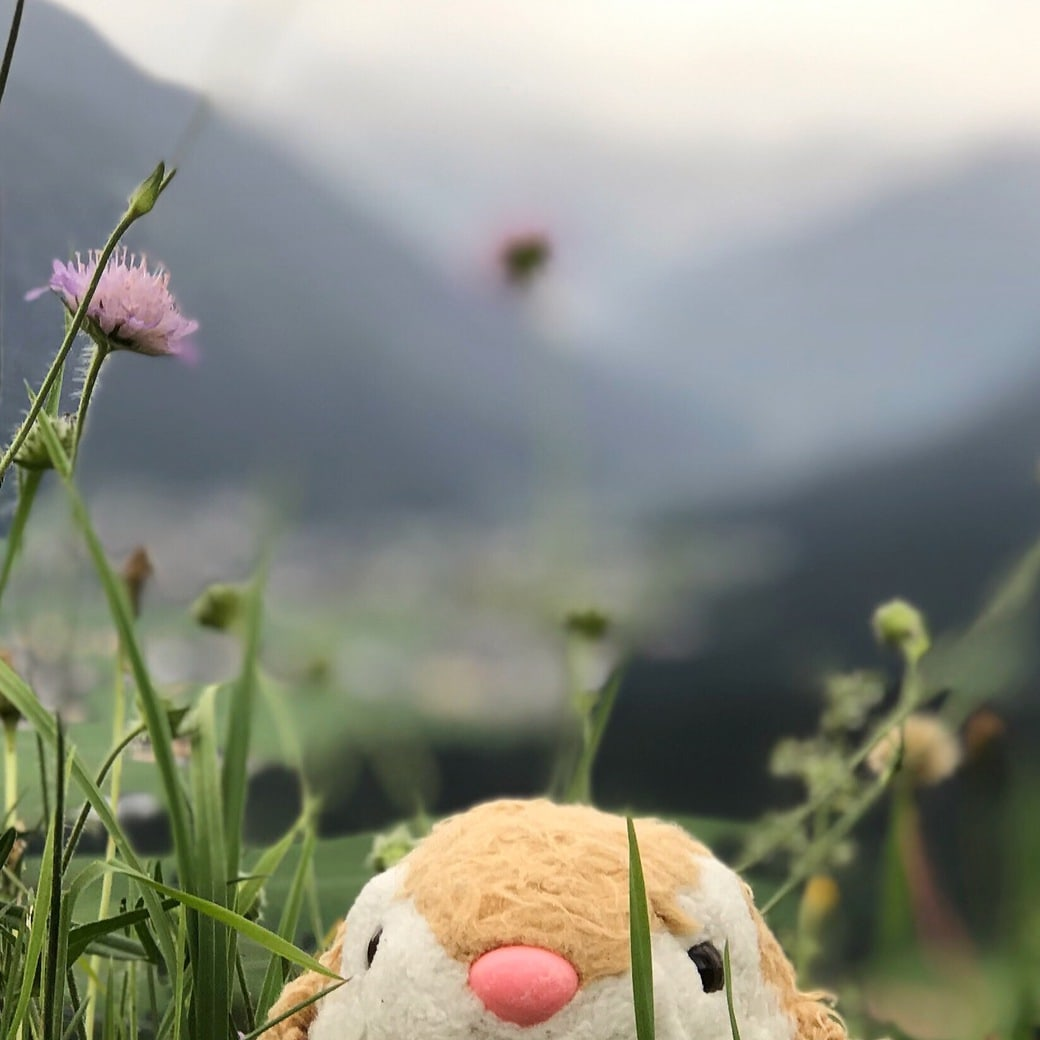 Hiker Bunny in Austrian mountains