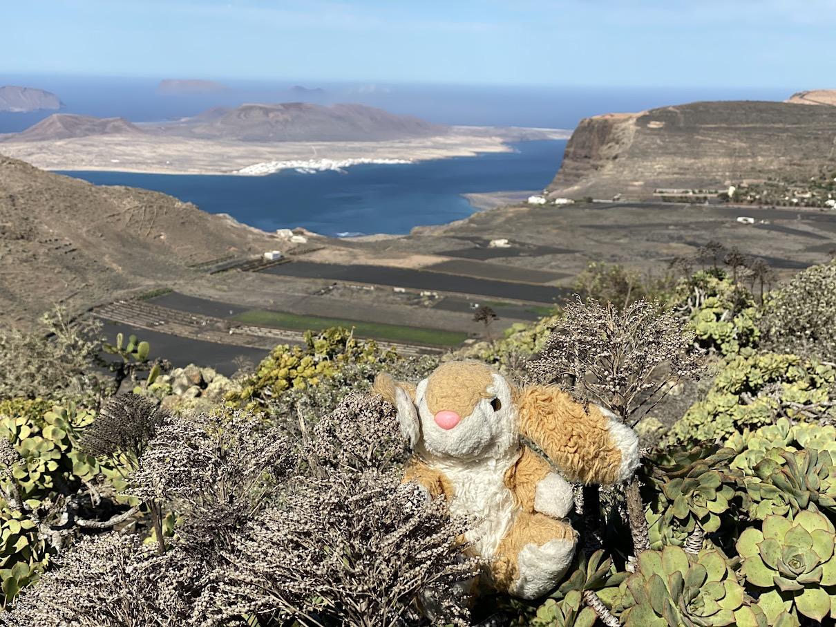 Bunny admiring gorgeous Lanzarote