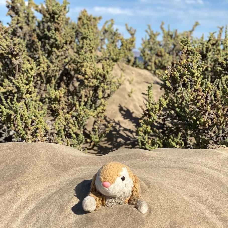 Bunny having a sand bath