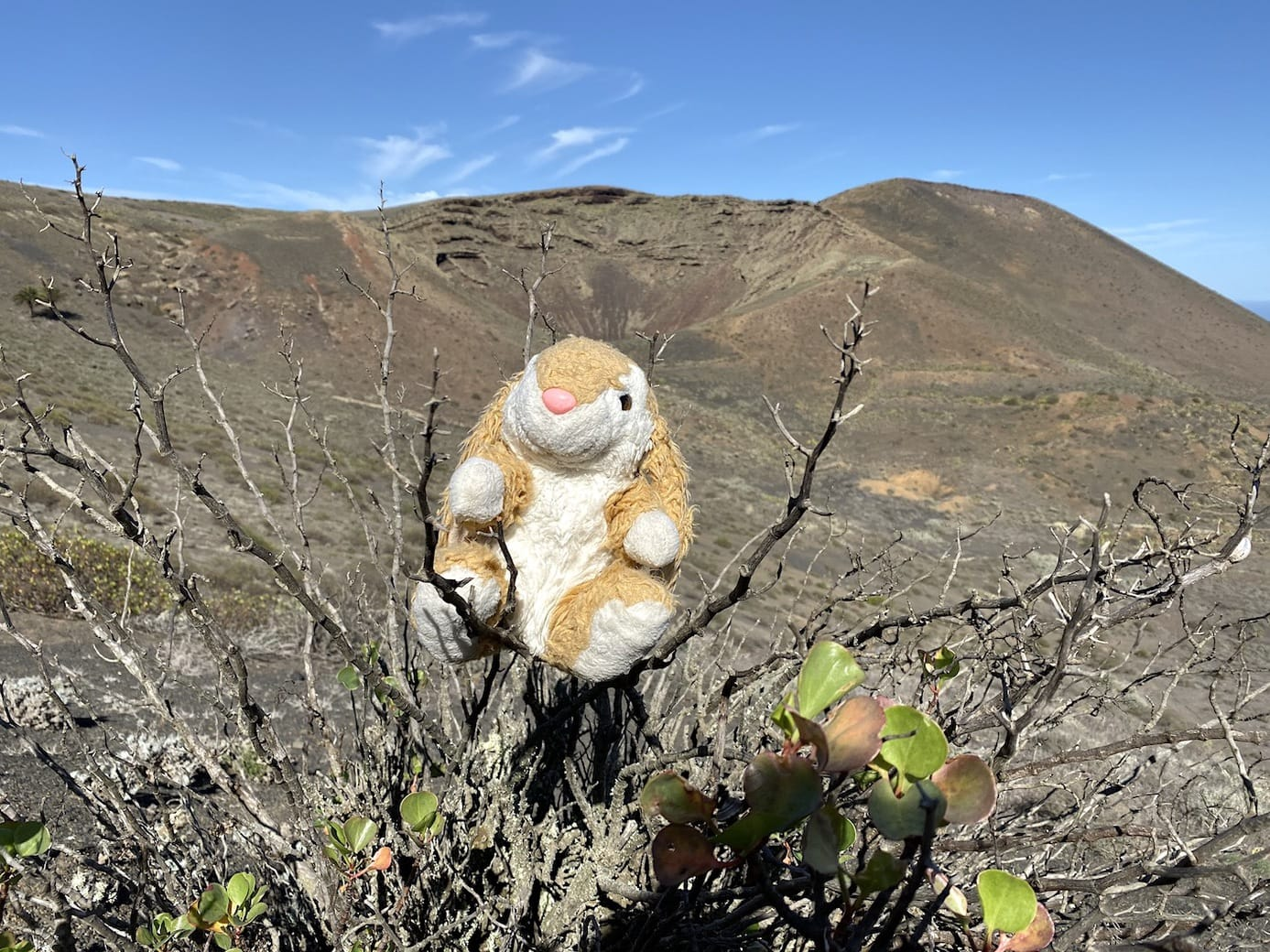 Bunny posing with a crater