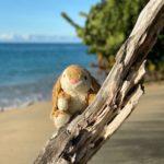 Beach Bunny in Grenada