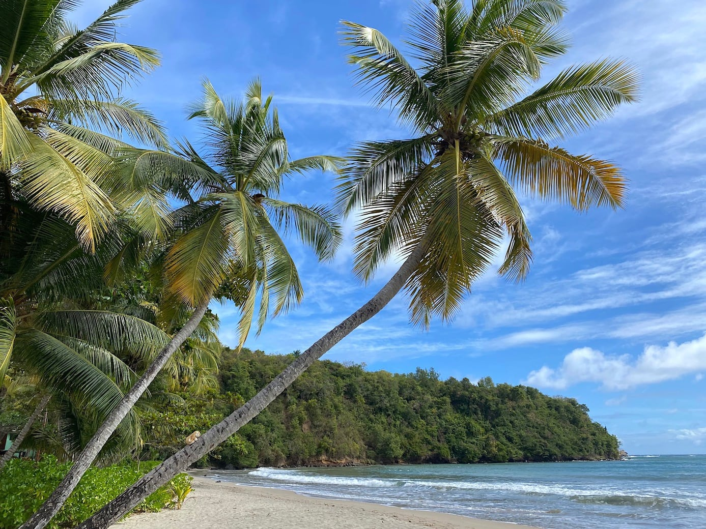 Palm-fringed beach in Grenada