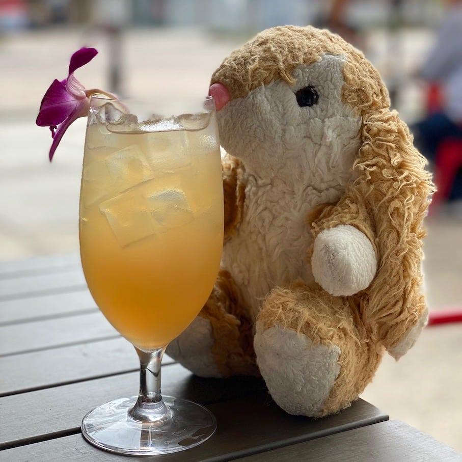 Bunny in Cider Press Cafe