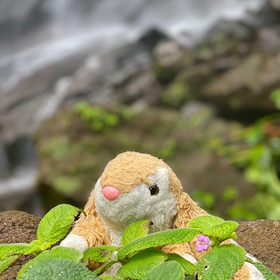 Bunny at Mt Carmel Falls
