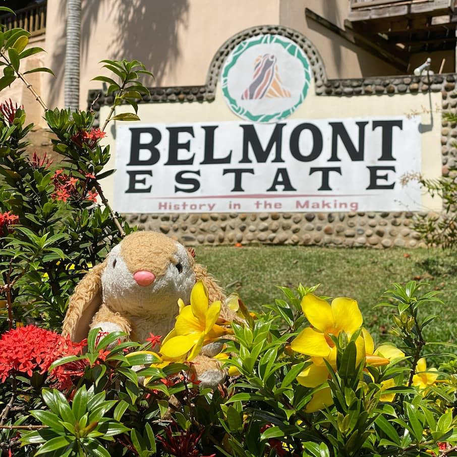 Bunny visiting Belmont Estate