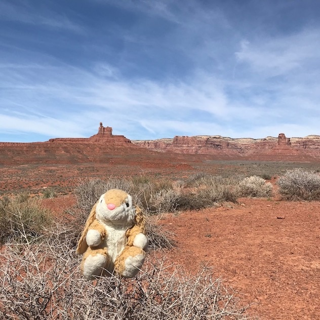 Bunny in Valley of the Gods