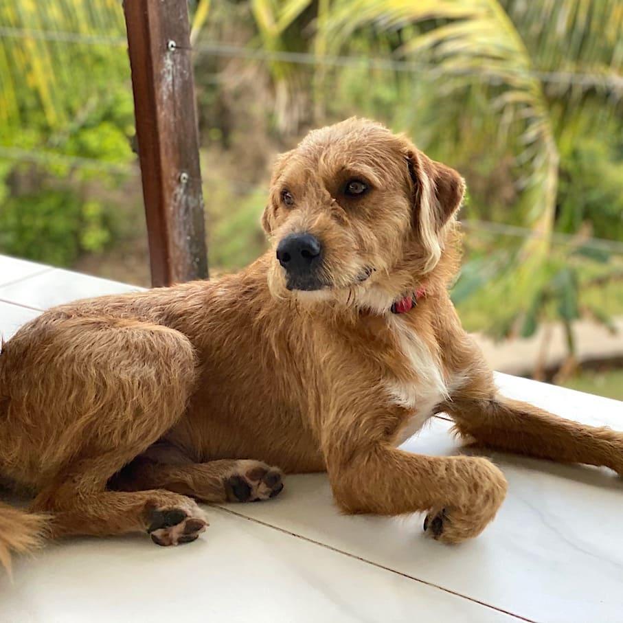 Cuddly watch dog Leo