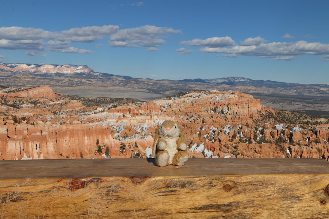 Bunny in Bryce Canyon NP