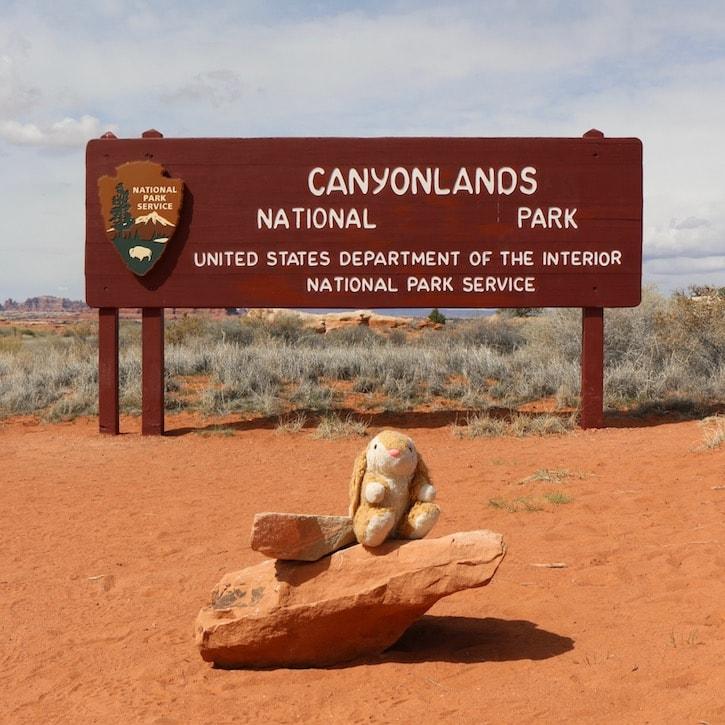 Bunny at Canyonlands NP