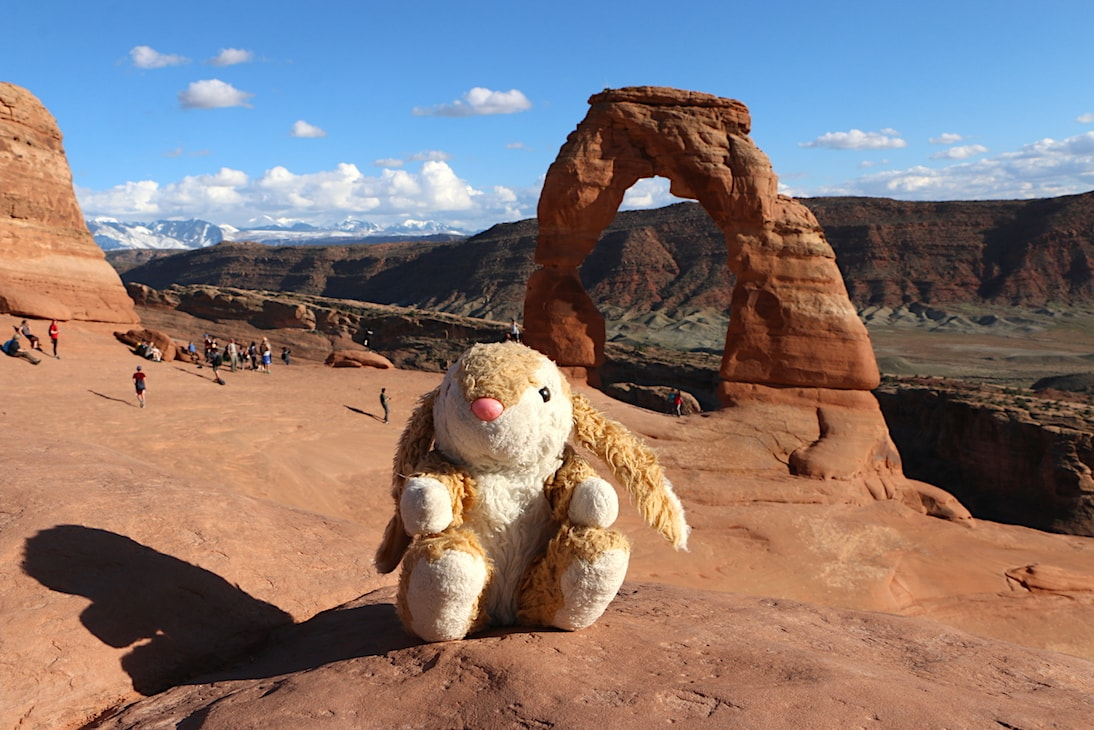 Bunny at Delicate Arch