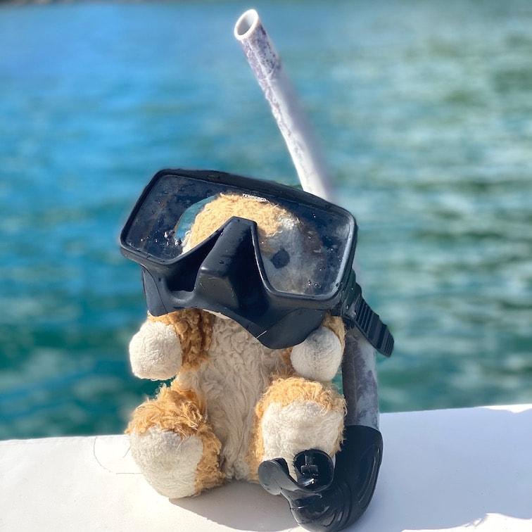 Bunny snorkeler