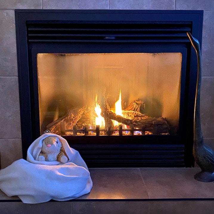 Bunny prefers warmth