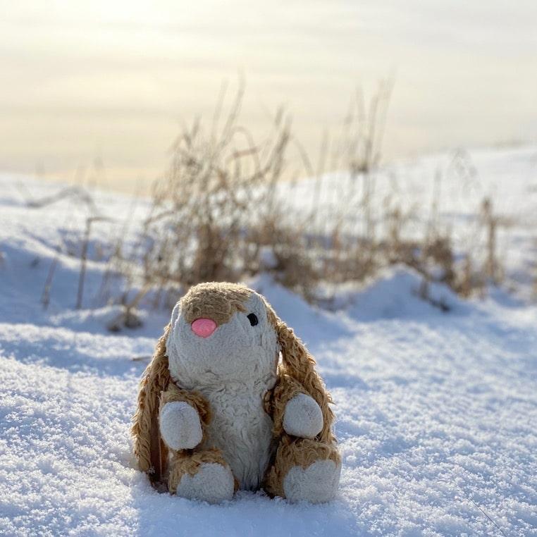 In cold Ottawa
