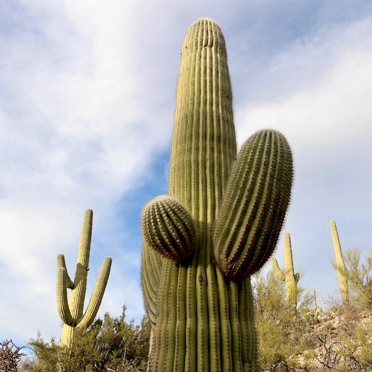Arizona scenery