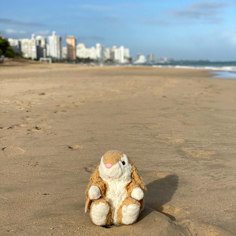 Bunny loved the beach