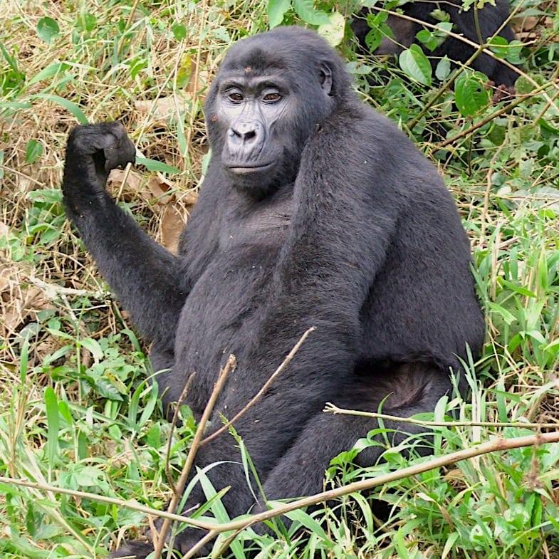 Bwindi Forest NP
