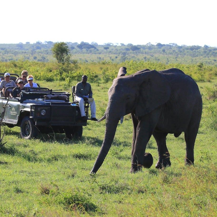 Elephant up close