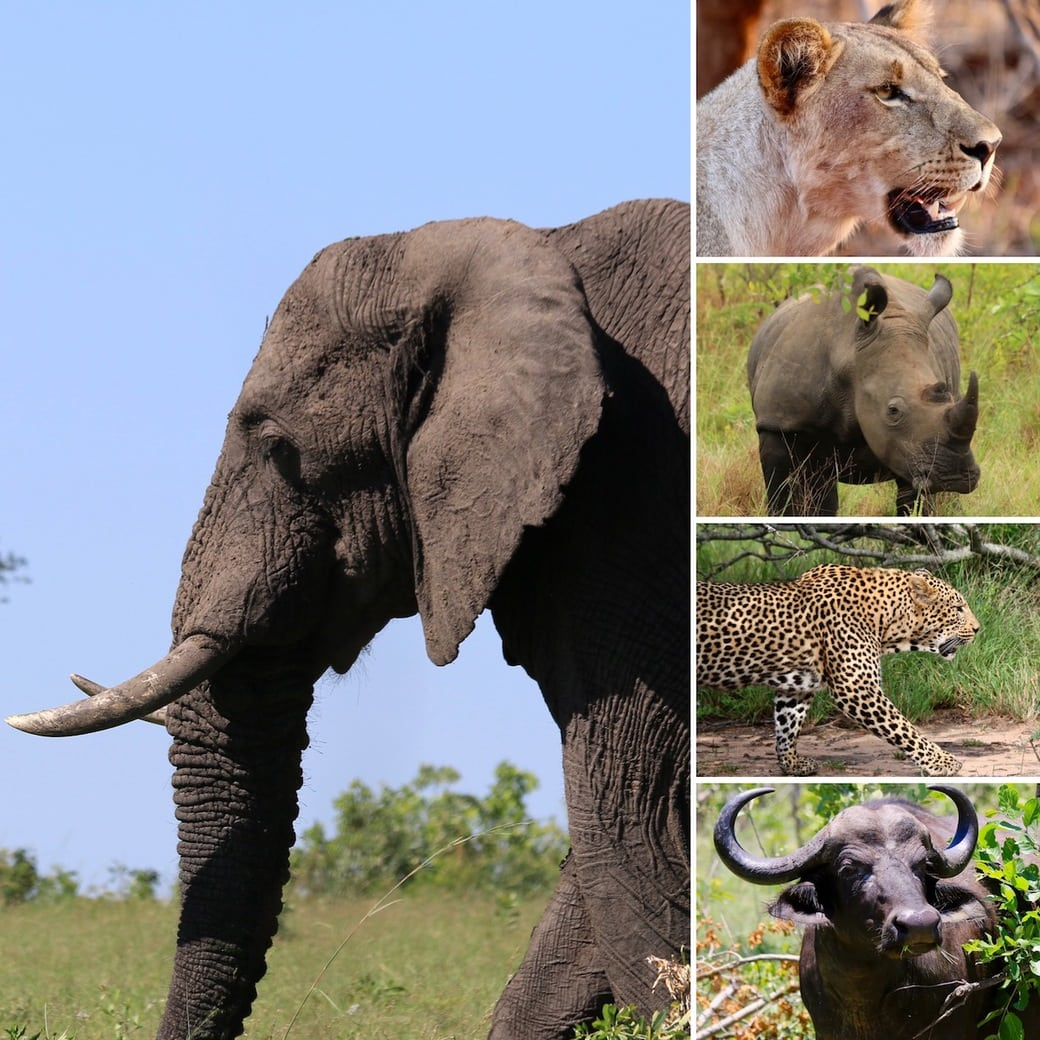 Iconic wildlife