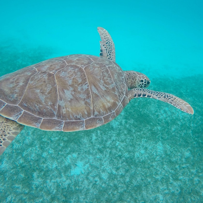 Wildlife at Tobago Cays